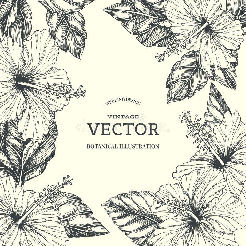 Vector o fundo do vintage com beira floral tropical no branco ilustração do vetor