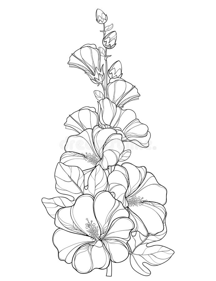 Vector o grupo com o rosea do Alcea do esboço ou a flor da malva rosa ilustração do vetor