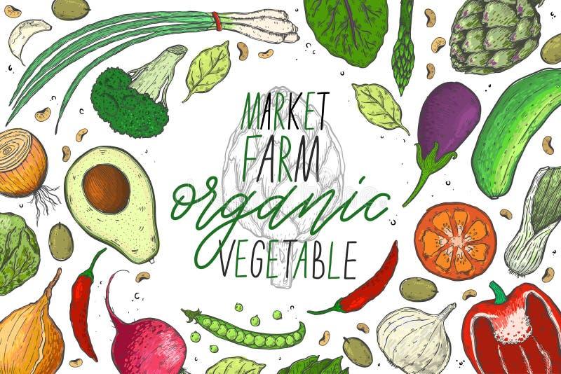 Vector o grupo grande de vegetais em um estilo realístico do esboço O alimento saudável, produto natural, exploração agrícola veg ilustração royalty free