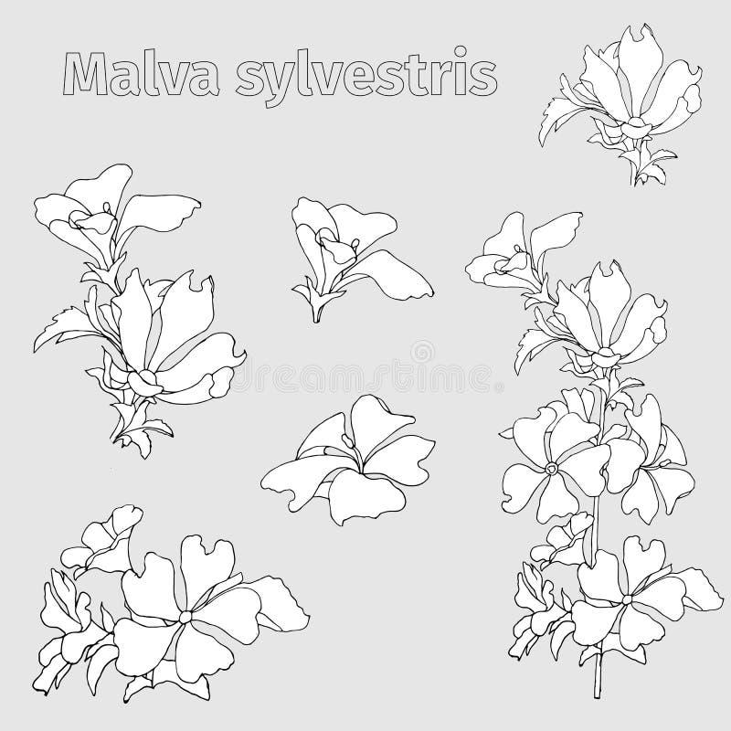 Vector o jogo das flores O contorno preto e branco floresce o Malva que os sylvestris são tirados na tinta em um fundo branco Esb ilustração stock