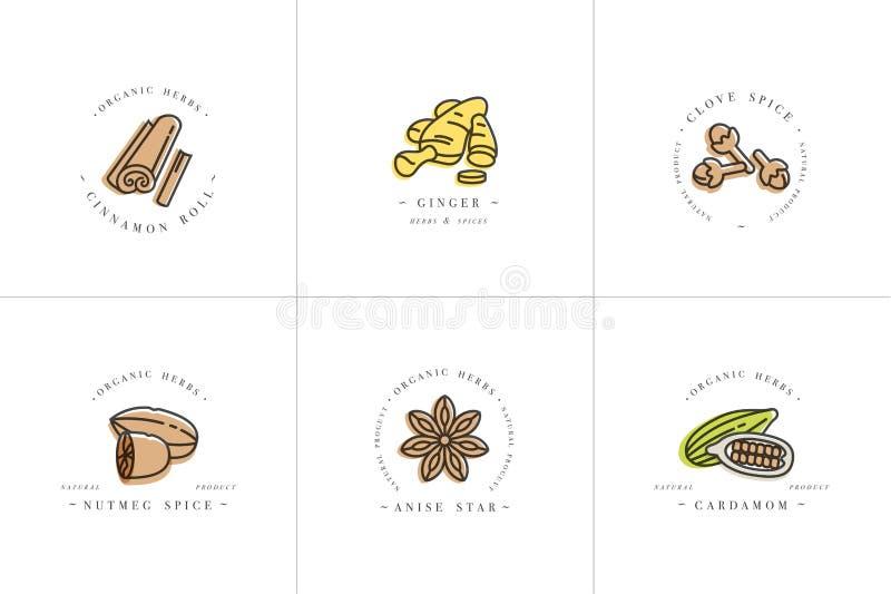 Vector o logotipo colorido e os emblemas dos moldes da cenografia - ervas e especiarias Ícone diferente das especiarias para o vi ilustração royalty free