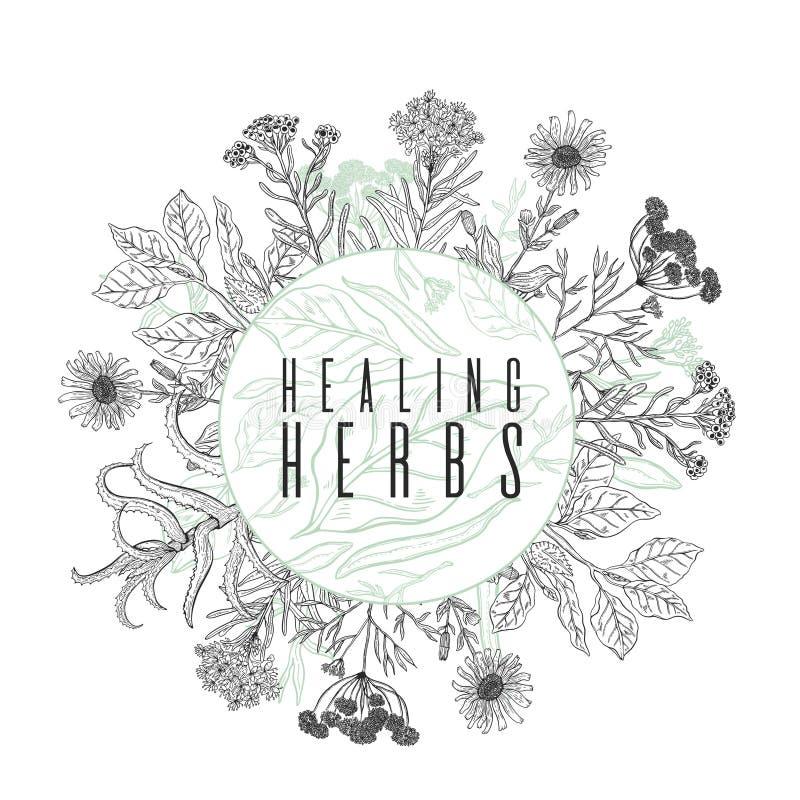Vector o quadro do fundo com tiragem das plantas selvagens, das ervas e das flores, ilustração botânica monocromática no estilo d ilustração stock