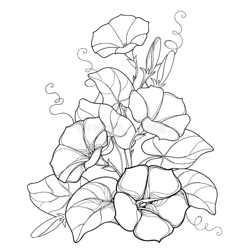 Vector o ramalhete com o sino da flor do Ipomoea ou da corriola do esboço, a folha e o botão no preto isolados no fundo branco ilustração do vetor