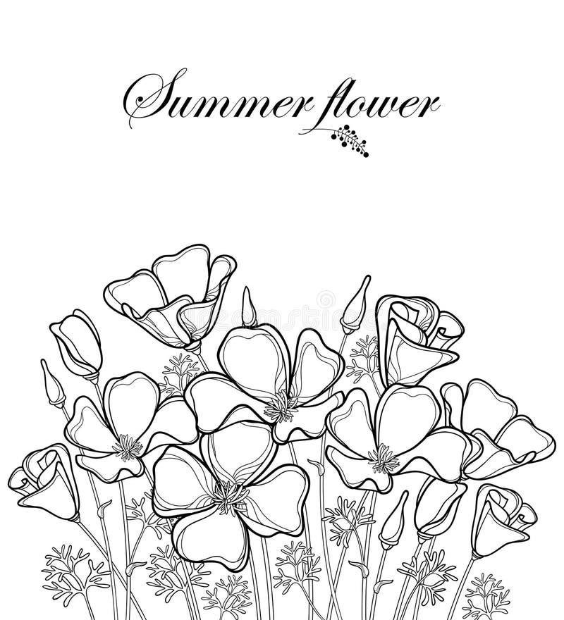 Vector o ramalhete da flor da papoila de Califórnia do esboço ou a luz solar de Califórnia ou o Eschscholzia, a folha, o botão e  ilustração stock