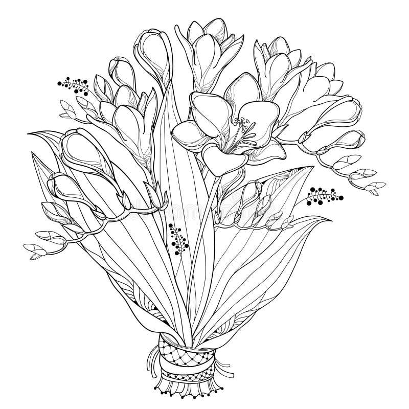 Vector o ramalhete da noiva com a flor da frésia do esboço, o botão e a folha ornamentado no preto isolados no fundo branco Flor  ilustração stock