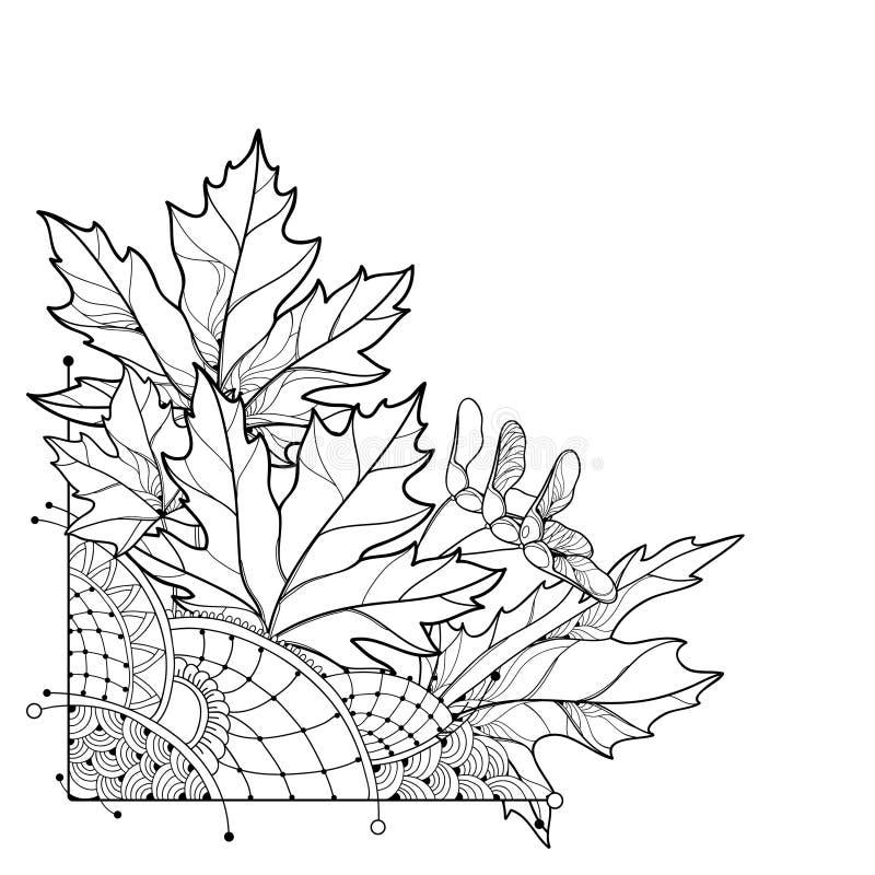 Vector o ramalhete de canto com esboço Acer ou as folhas ornamentado do bordo no preto isoladas no fundo branco Composição com bo ilustração stock