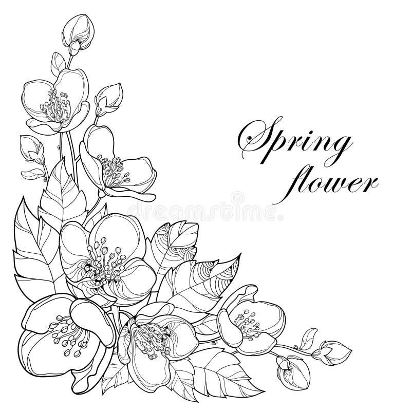 Vector o ramo das flores, do botão e das folhas do jasmim do esboço no preto isolados no fundo branco Floral para o projeto da mo ilustração do vetor