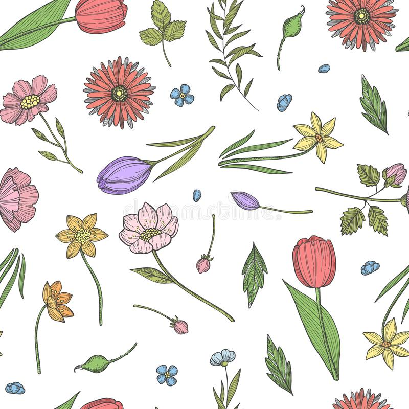 Vector o teste padrão de flores ou a ilustração tirada mão do fundo ilustração royalty free