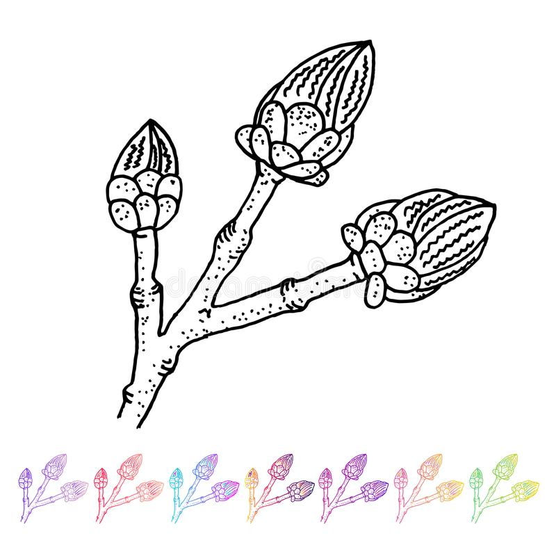 Vector o teste padrão do preto do botão do rim no projeto de planta Flora pintado à mão do jardim da mola Sletch preto isolado no ilustração do vetor