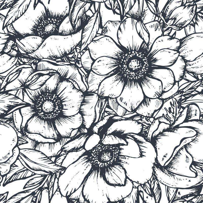 Vector o teste padrão sem emenda preto e branco com as flores tiradas mão da anêmona ilustração stock