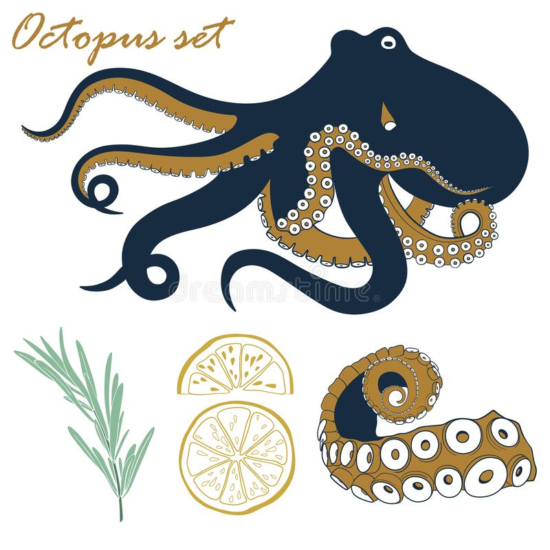 Vector octopus seafood set. Hand drawn octopus, tentacle, lemon and rosemary illustration. vector illustration