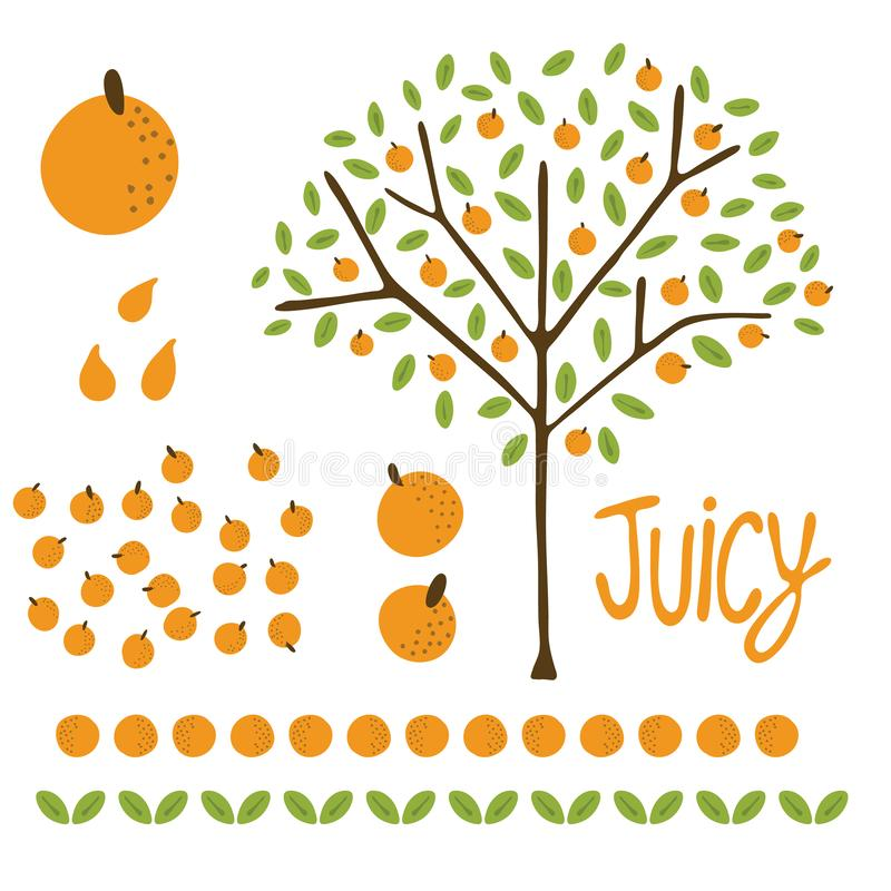 Vector orange citrus fruit tree with leaves. Hand drawn illustration elements set. Organic garden grove with juicy oranges hanging on branch and leaf border royalty free illustration