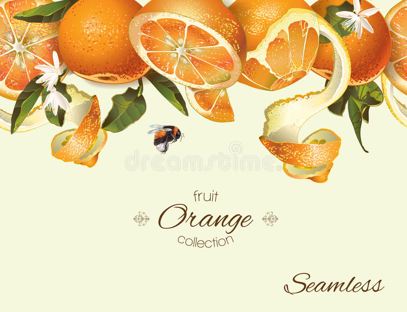 Vector orange seamless banner. Background design for juice, tea, natural cosmetics, bakery with orange filling, farmers marcet, grocery ,health care products stock photos