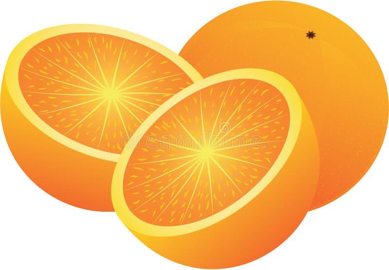 Vector oranges stock illustration