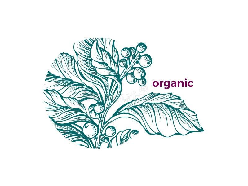 Vector organic symbol Nature design Green art sketch Tea mate branch royalty free illustration