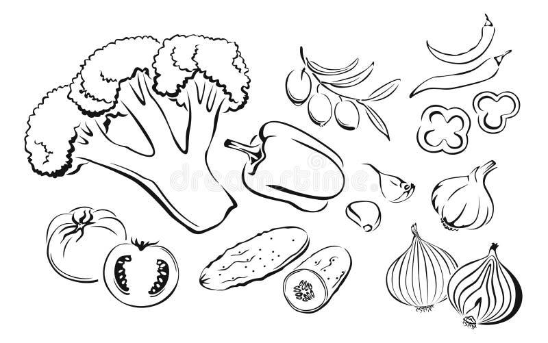 Vector outline cartoon illustration of vegetables. royalty free illustration