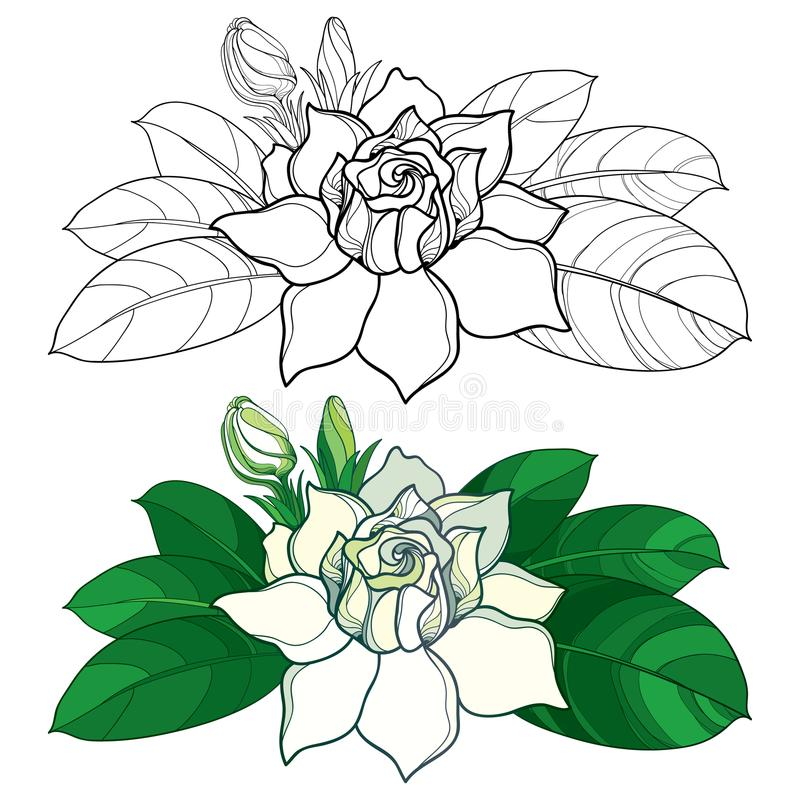 Download Vector Outline Gardenia Flower Bud And Ornate Leaves In Black Pastel Color Isolated