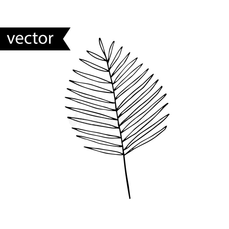 Palm Leaf Outline Stock Illustrations 10 284 Palm Leaf Outline Stock Illustrations Vectors Clipart Dreamstime Leaf outline tropical outline leaf tropical leaf outline tropical nature plant background leaves green maple leaf symbol tree element decoration autumn fall decorative spring environment veins flower icon ornate abstract floral fine illustration and painting shape ornament summer decor silhouette natural. palm leaf outline stock illustrations