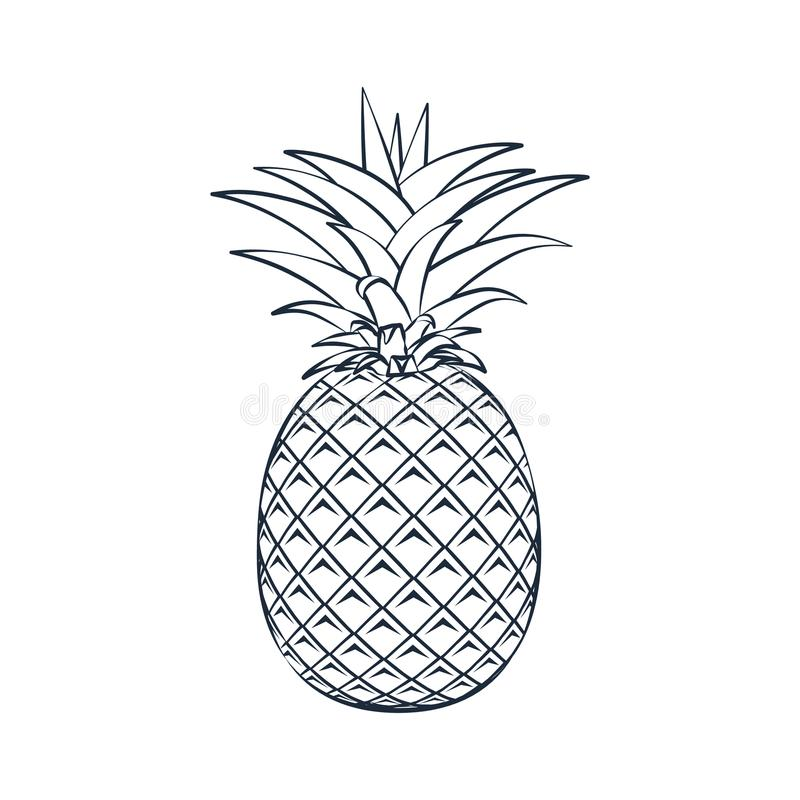 Vector outline pineapple icon stock illustration for Pineapple in the ground