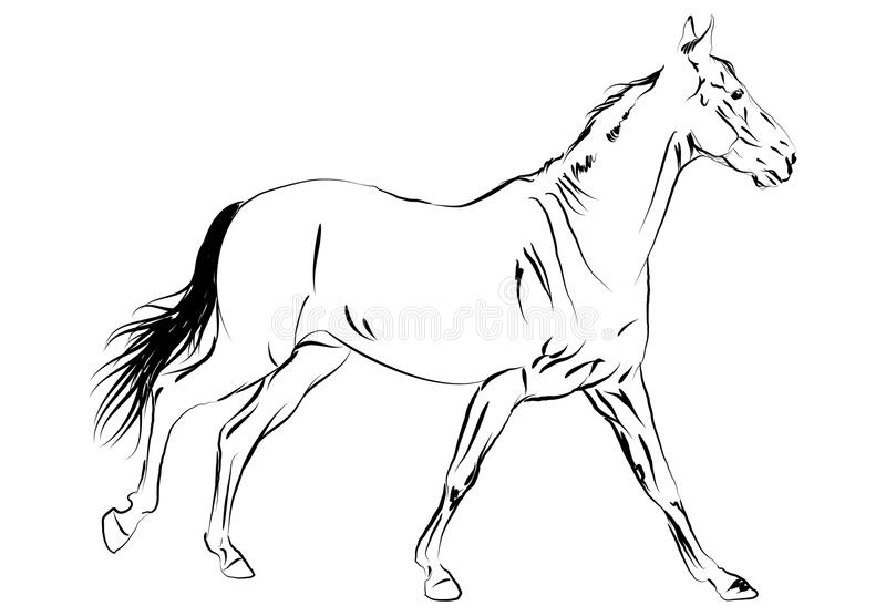 Vector paard royalty-vrije illustratie