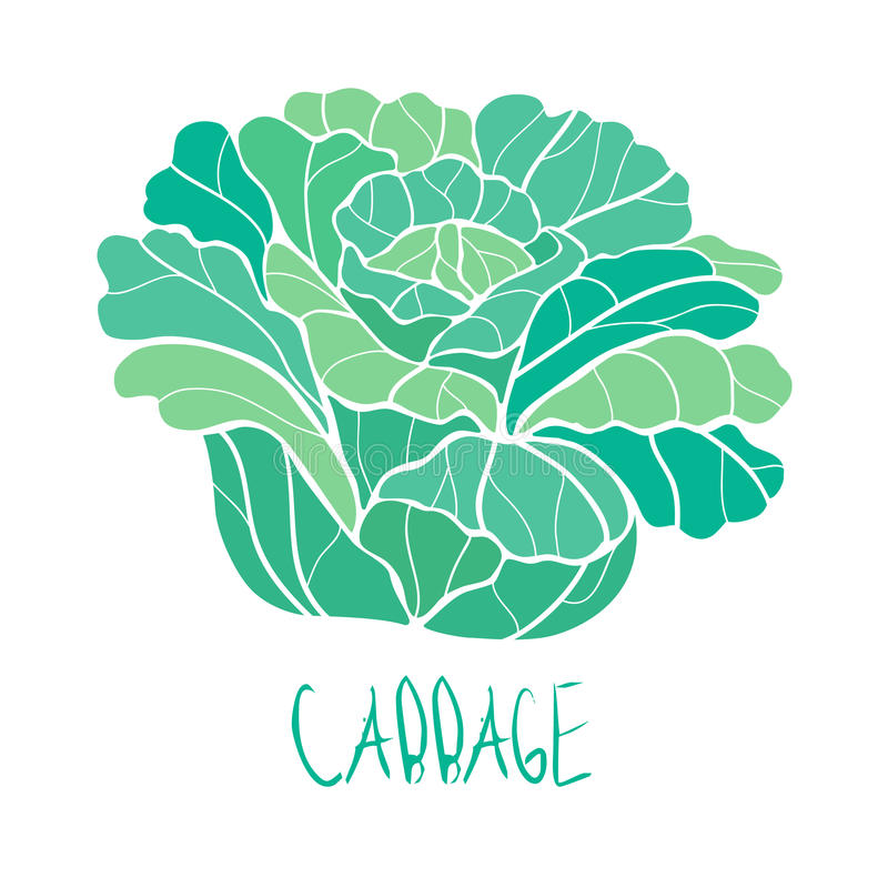 Vector paint hand drawn picture of cabbage stock illustration