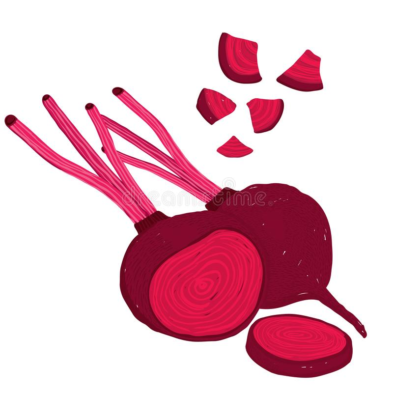 Vector painterly set of beets, beetroot, raw and cut. Editable, scalable illustration isolated on a white background. Use it for recipes, restaurant menus and vector illustration