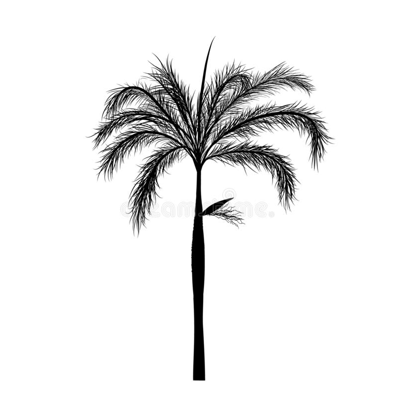 Vecter of palm trees, tree. Vector of palm tree silhouette icons on white background, coconut tree flat icon for vacation apps and websites royalty free illustration