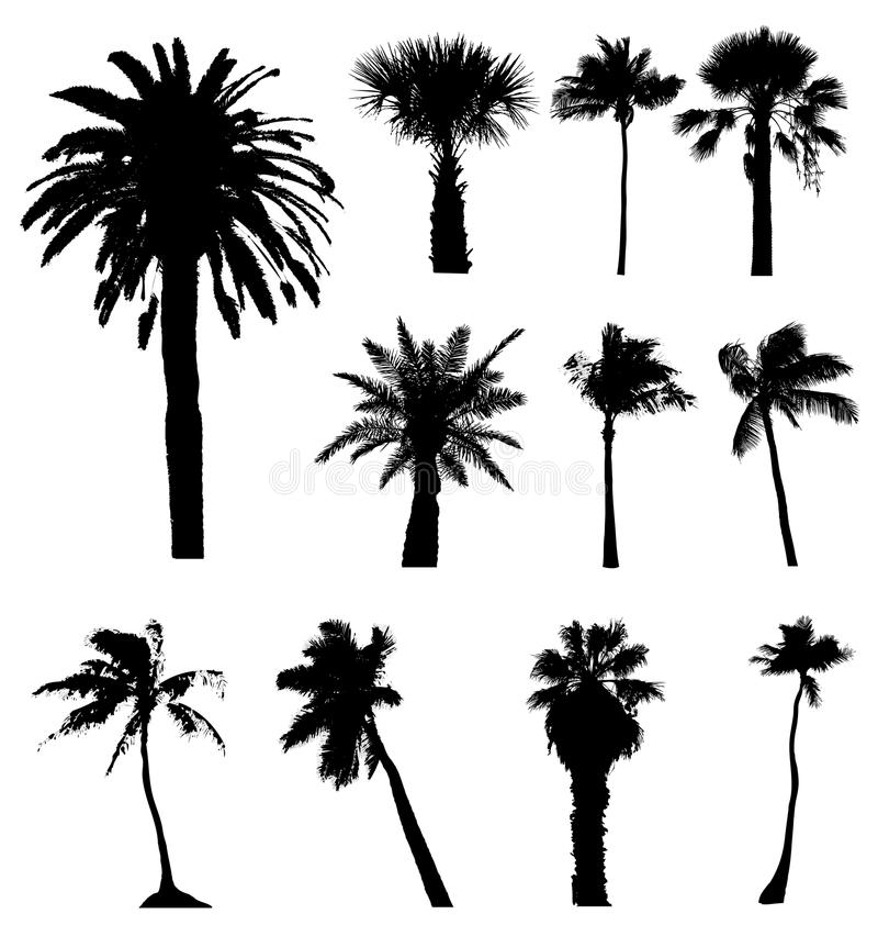 Vector palm trees silhouettes isolated on white background, palms tree palmtree palmtrees silhouette vectors tropical urban leaves vector illustration