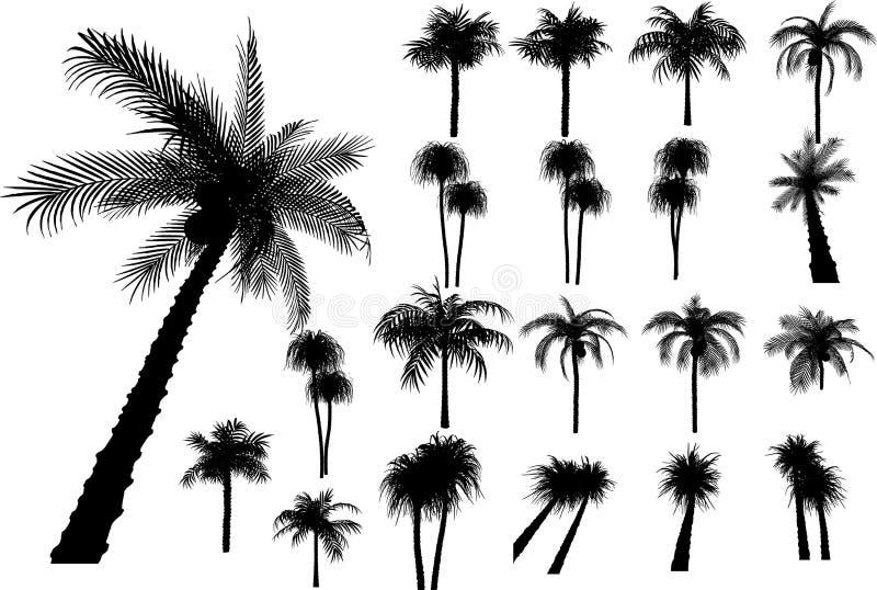 Vector palmen en bomen vector illustratie