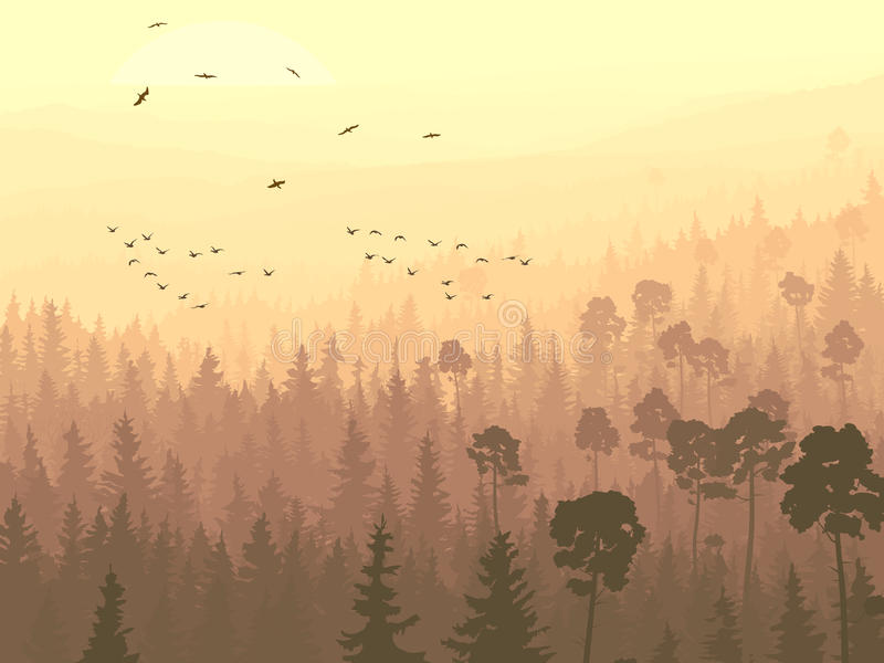 Wild birds in coniferous wood in morning fog. royalty free illustration
