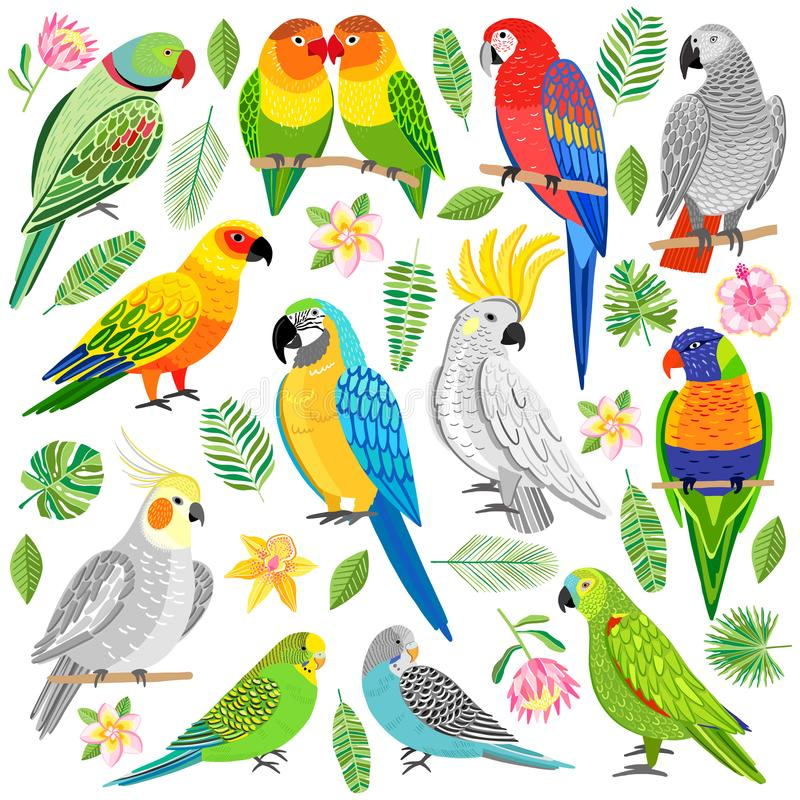 Vector parrot illustration. Tropical bird isolated royalty free illustration