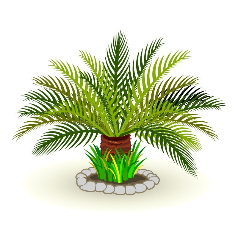 Vector picture of dypsis lutescens palm tree grass rocks stock illustration