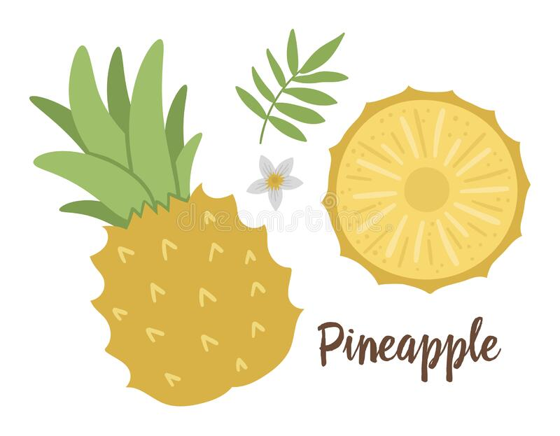 Vector Illustration Of Pineapple Flower On White ...