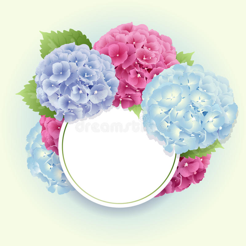 Vector of pink, blue and violet hydrangea background stock illustration