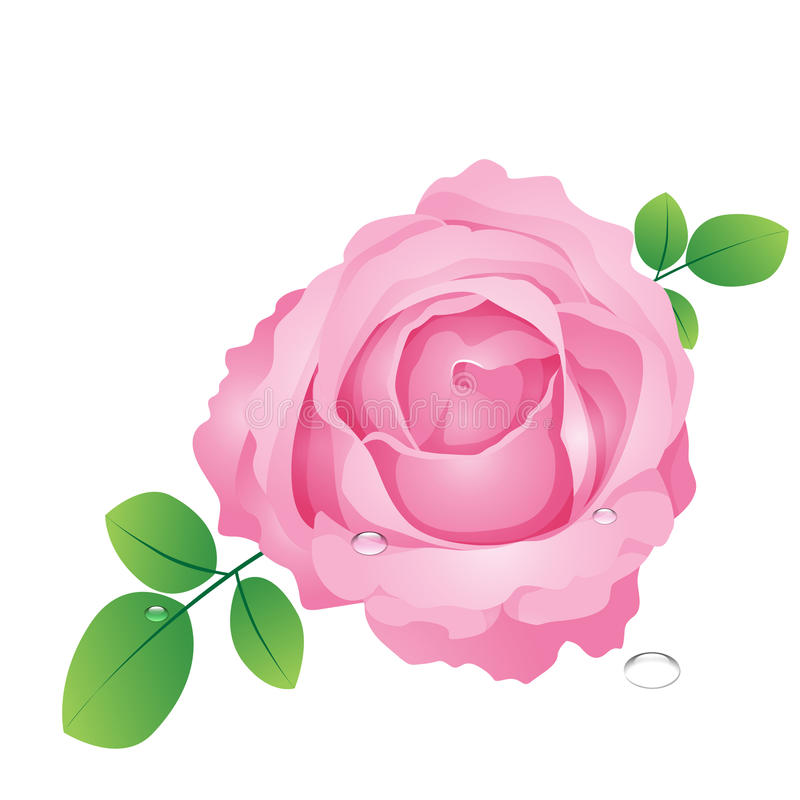 Vector pink roses stock photo