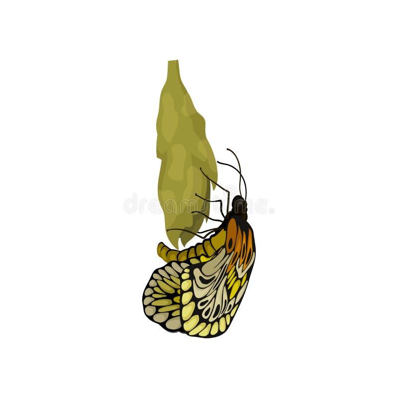Vector plano de la mariposa nuevamente nacida en el capullo Insecto de vuelo hermoso Tema de la naturaleza y de la botánica stock de ilustración