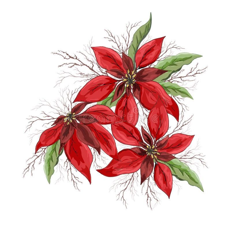 Vector poinsettia winter flower isolated on white background. hand-drawn Doodle in realistic style, close-up. modern design for stock image