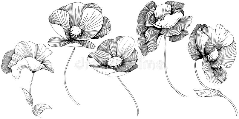 Vector poppy. Floral botanical flower. Wild spring leaf wildflower isolated. Vector wildflower for background, texture, wrapper pattern, frame or border stock illustration