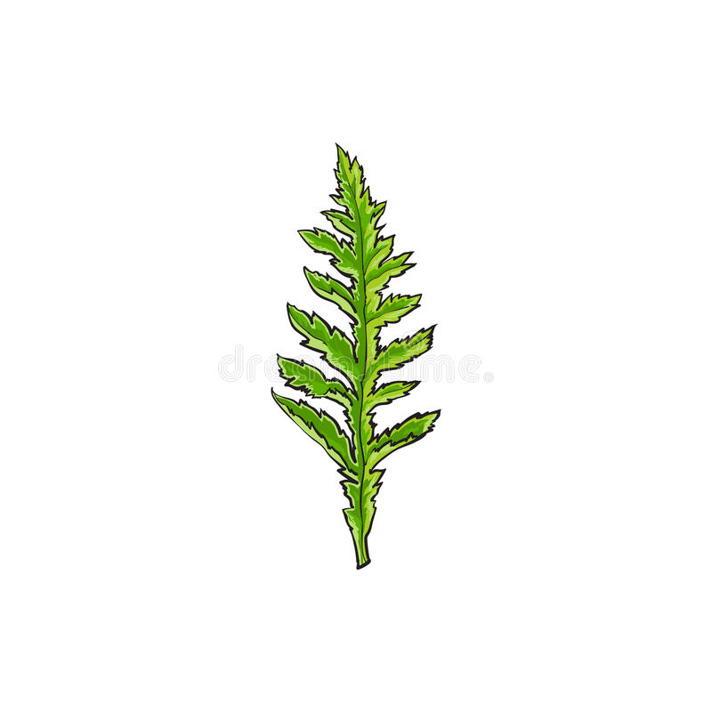 Vector poppy flower leaf isolated illustration stock vector download vector poppy flower leaf isolated illustration stock vector illustration of floral blossom mightylinksfo Choice Image