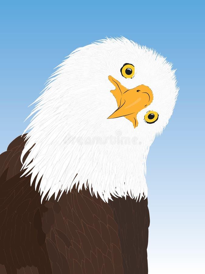 Vector portrait of a bald eagle. Portrait of a bald eagle. Vector hand draw vector illustration