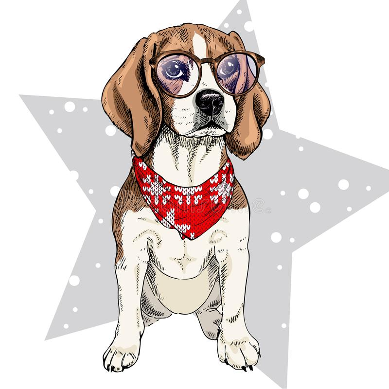 Vector portrait of beagle dog wearing winter bandana and glasses. Isolated on star and snow. Skecthed color illustraion. Christmas, Xmas, New year. Party vector illustration