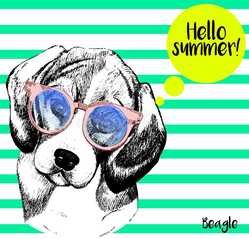 Vector portrait of beagle, with sunglassess. Hello summer. Hand drawn dog illustration. on mint green strips. Vector close up portrait of beagle dog, wearing royalty free illustration
