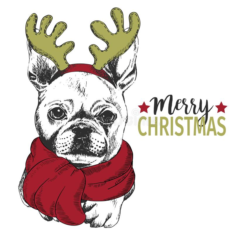 Vector portrait of Christmas dog. French bulldog wearing deer horn rim and scarf. Christmas greeting card, decoration. Vector portrait of Christmas dog. French vector illustration