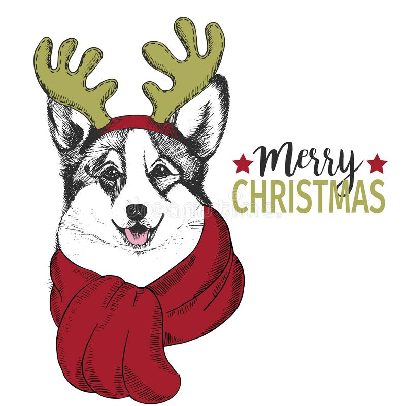 Vector portrait of Christmas dog. Welsh corgi dog wearing deer horn rim and scarf. Use for greeting card, decoration. royalty free illustration