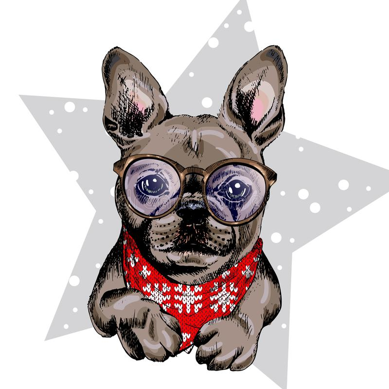 Vector portrait of French bulldog dog wearing winter bandana and glasses. Isolated on star and snow. Skecthed color royalty free illustration
