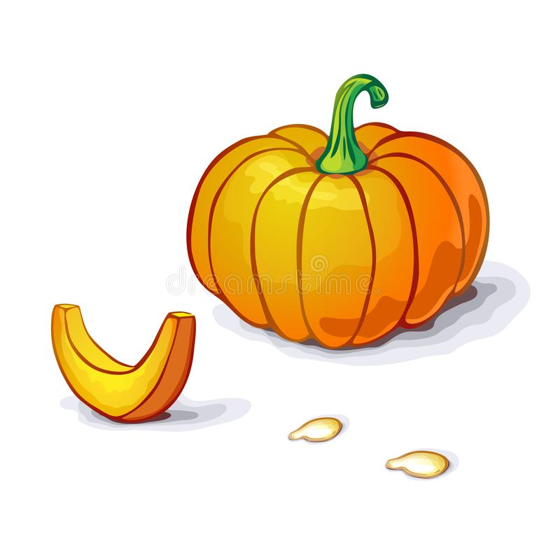 Vector pumpkin or squash illustration with slice and seeds isolated on white backdrop. pumpkin icon. realistic Orange pumpkin with. Stem for logo, halloween or royalty free illustration
