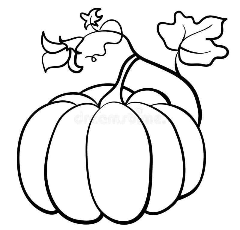 Download Vector pumpkin vegetable stock vector. Illustration of food - 21274324