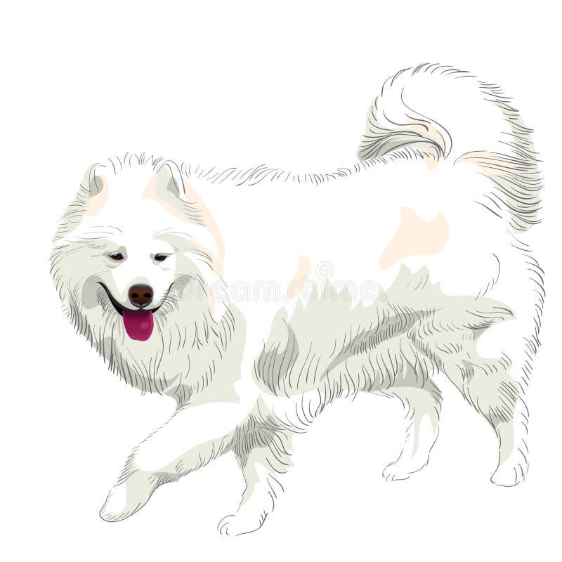 Vector Purebred Samoyed Dog Smile Royalty Free Stock Images