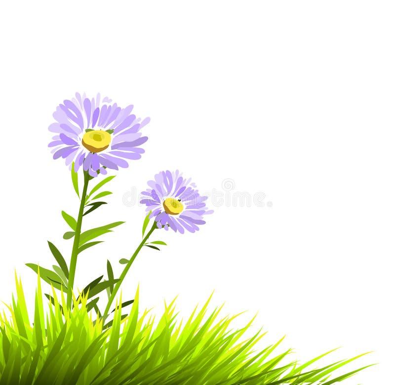 Vector purpere bloemen vector illustratie