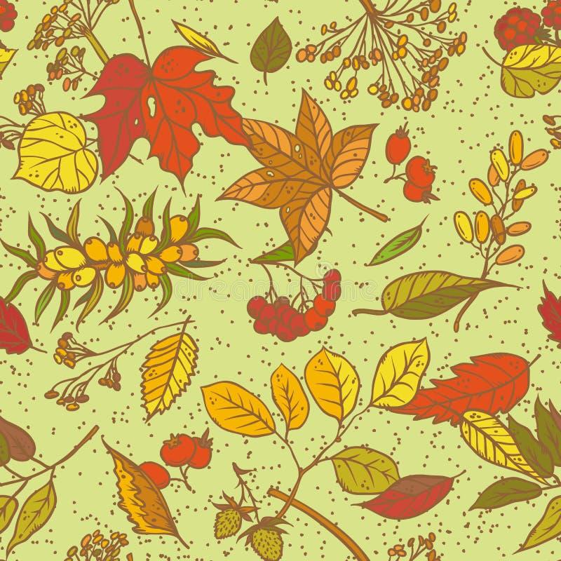 Vector ramos sem emenda do esboço do teste padrão com folhas de outono, as flores secadas e as bagas maduras Gráficos ervais colo ilustração stock